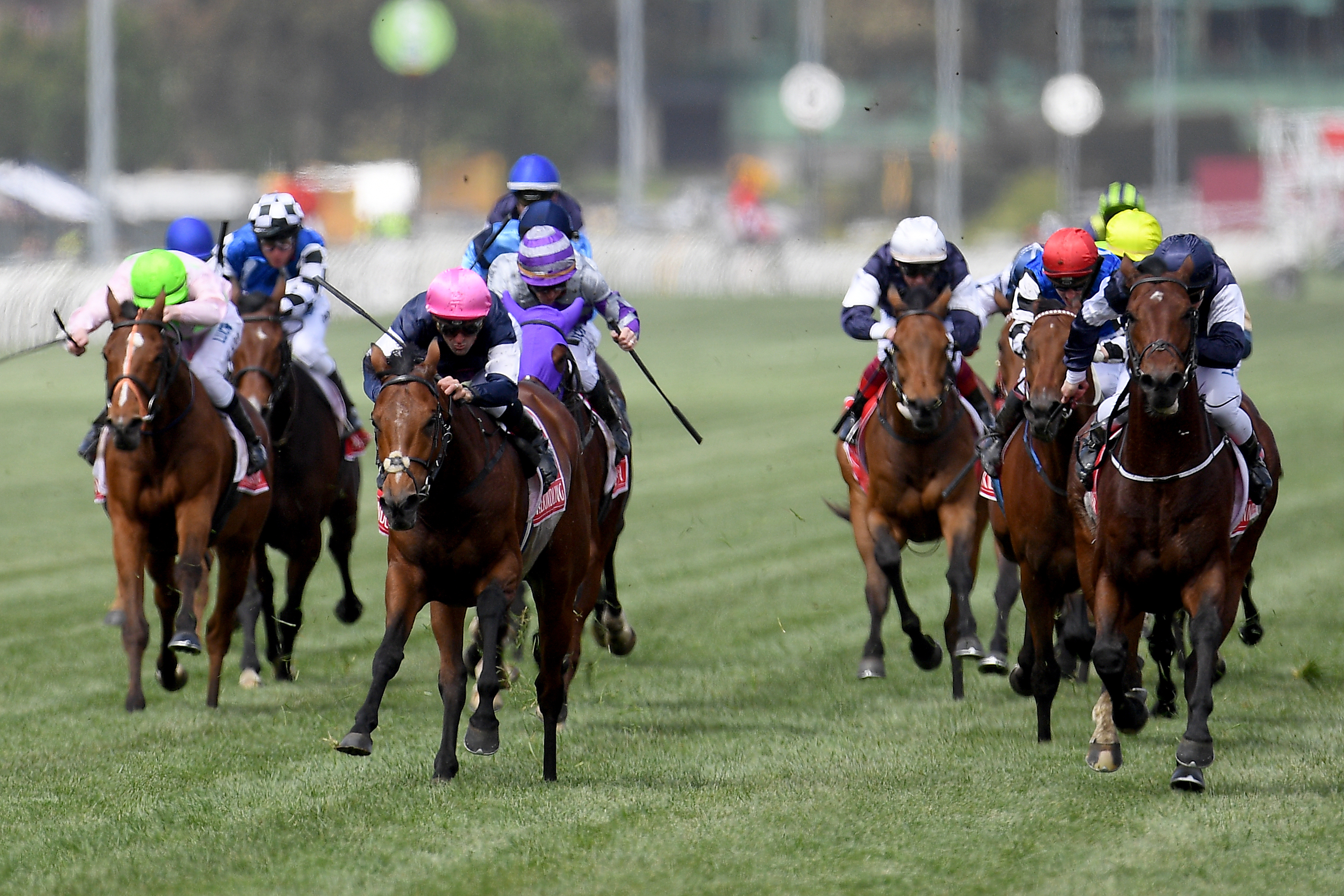 Melbourne Cup 2018 Horses - Field & Form Guide | TAB